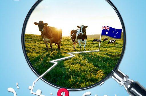 Công ty sữa tươi Úc giá rẻ uy tín