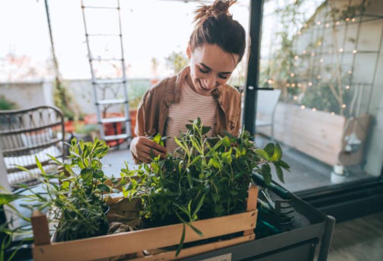 tự trồng rau trên ban công