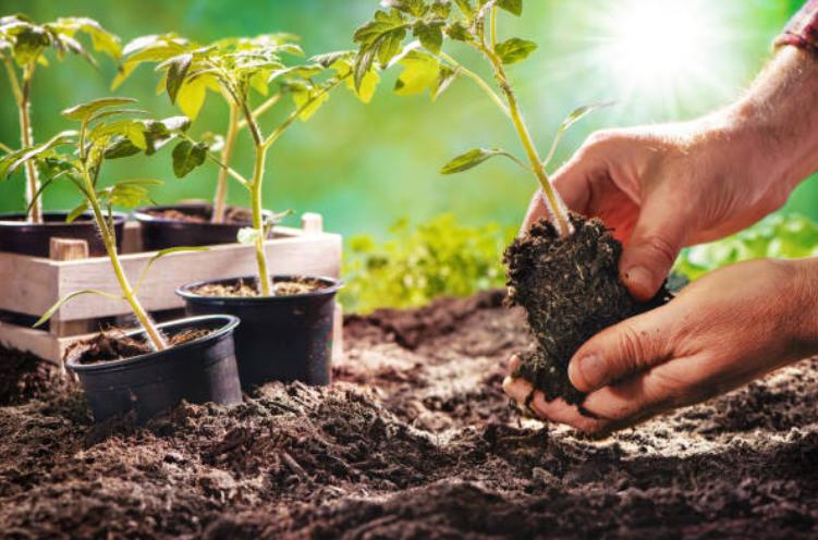làm vườn nâng tự trồng rau