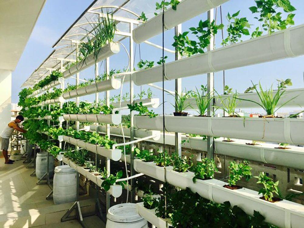 trồng cây để nuôi dưỡng tâm hồn, thoải mái với cuộc sống